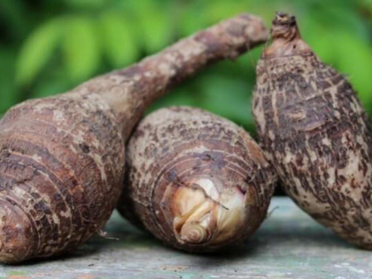 a tukh malanga segít a fogyásban elveszít 5 centi hasi zsírt