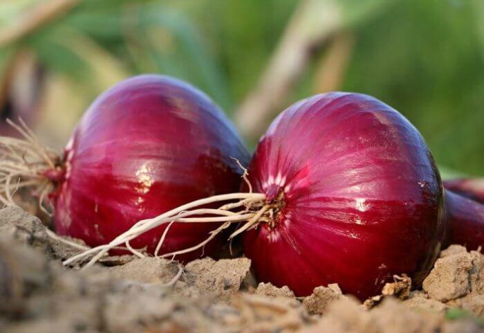 pruebas de picadura de cebolla para diabetes