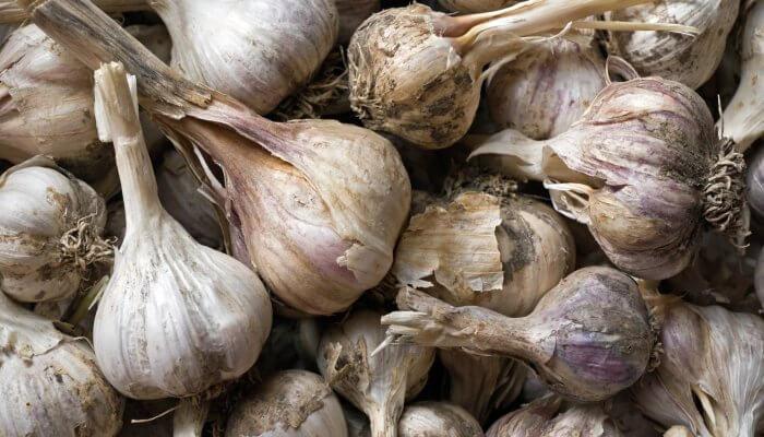 Beneficios de comer ajo chino en ayunas