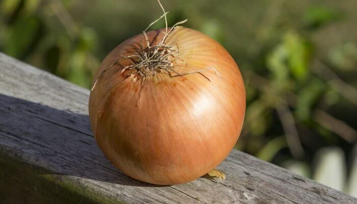 cebolla morada prostata
