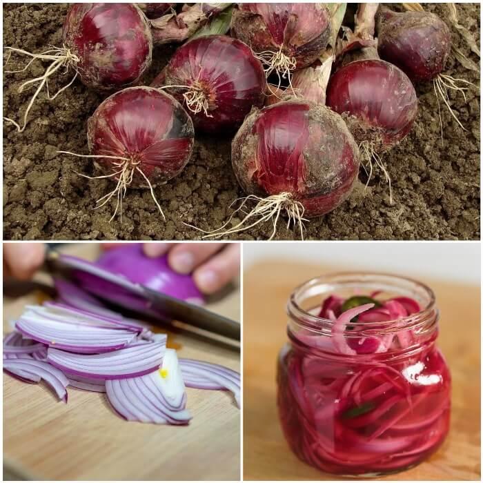 Propiedades y Beneficios de la Cebolla Morada