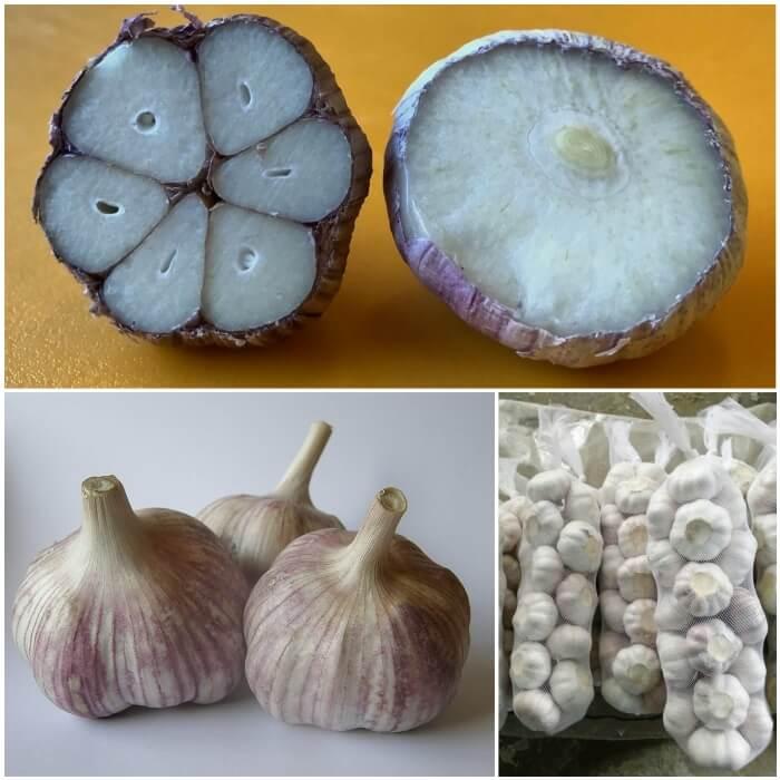 Usos y consumo del ajo chino